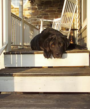 A Pretty Porch with a Purpose