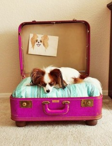 dog bed upcycled from a suitcase