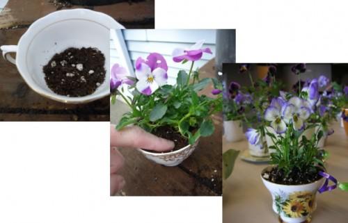 DIY tea cup planters