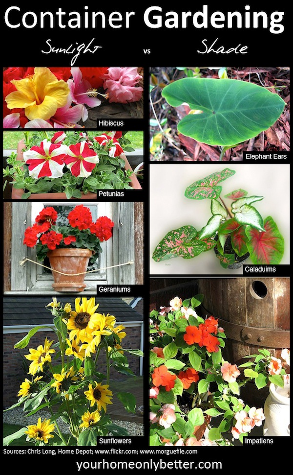 Sun vs Shade- which plants should you choose for container gardening?