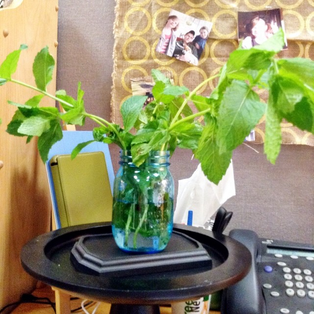 When a co-worker brings you fresh mint for mojitos it also becomes an office decor opportunity. #officedecor #mojitos #finegardeningmagazine #ilovemyjob