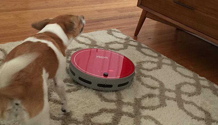 bObi Pet Cleans Up for Fall